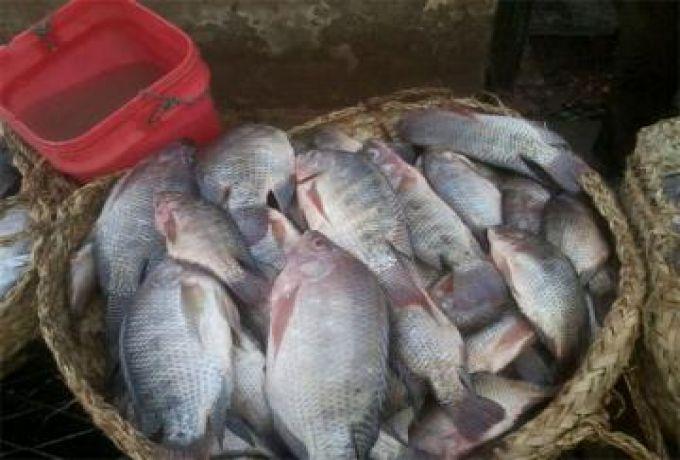 سوق السمك بالموردة ..إشتر وإتفرج يا سلام ..!