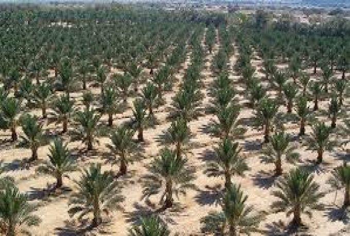 الإمارات تدعم تطوير زراعة النخيل وإنتاج التمور بالسودان