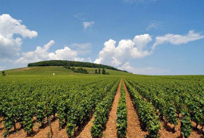 السودان يوافق لمصر تخصيص أراض زراعية بالشمالية وشمال كردفان