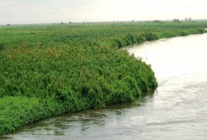 إلغاء الترخيص لمستثمر خليجي بولاية نهر النيل