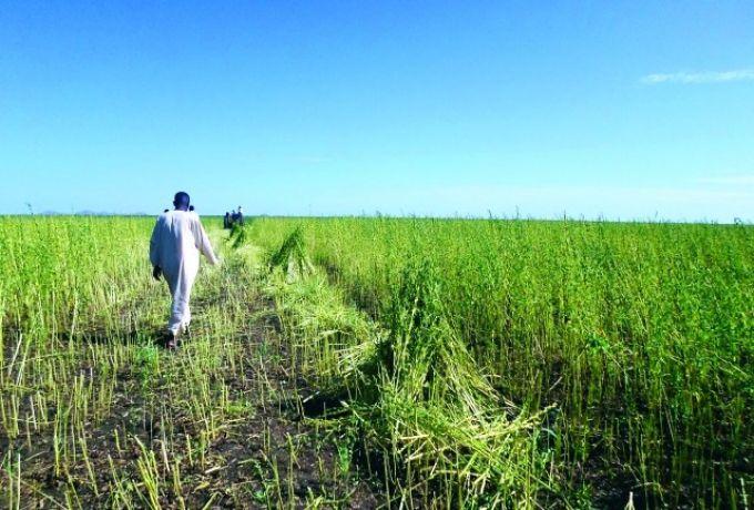 تركيا تبدأ مشروعها الزراعي بالسودان بالقطن