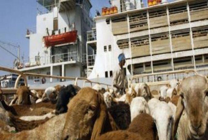 السودان يسعى إلى رفع مساهمة قطاع الثروة الحيوانية في الاقتصاد