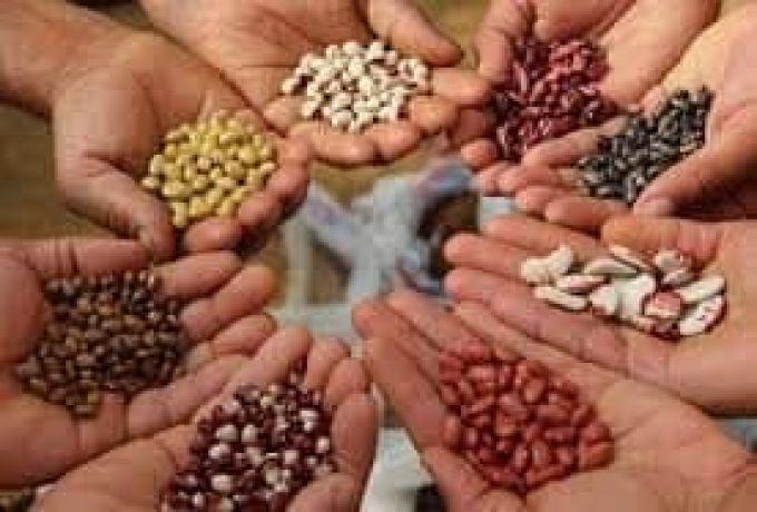 تقاوى منخفضة الإنبات تدخل النيل الأبيض بموافقة الوزارة
