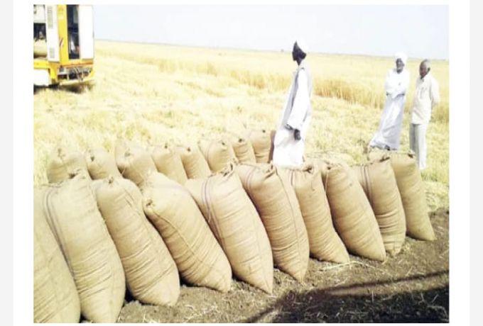 وكيل وزارة التجارة : احتياطي البلاد من القمح يكفي حتى نهاية الشهر